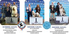 Have a look at the best photos and results of the Slavonia Shows Dog Shows from Croatia. Lhasa Apso, Alaskan Malamute, Dog Show, Croatia, Cool Photos, News