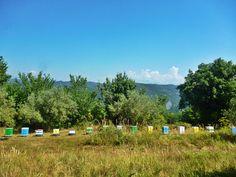 Στα όρη του Βάλτου, στη νότια Πίνδο, συλλέγουμε το μέλι καστανιάς και βελανιδιάς (δασόμελο) κατά τους καλοκαιρινούς μήνες.