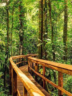 Der Cinco Ceibas Dschungel- und Adventure Park im Norden Costa Rica's, lies hier mehr. #CostaRica #PuraVida #CincoCeibas #Abenteuer #Adventure #Reisen #Tropenwanderer