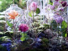 Rose tollwasblumenmachen.de
