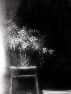 horseunderthetable:  Solitude standing still ©Etienne Cabran