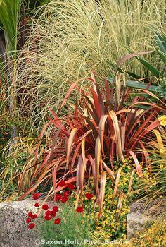 Modern mixed border with ornamental grass (Cortaderia) and Phormium at San Francisco Botanical Garden entry