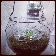 Een leuk hangend terrarium!