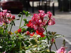 Floral beauty in a hanging basket.