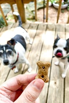 EASY Dog Cupcakes aka PUPCAKE recipe! • The Simple Parent Cupcakes For Dogs Recipe, Dog Cupcakes, Homemade Dog Treats, Healthy Dog Treats, Dog Treat Recipes, Dog Food Recipes, Pupcake Recipe, Dog Biscuits, Animal Party