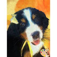 Bernese Mountain Dog Puppy Portrait 544