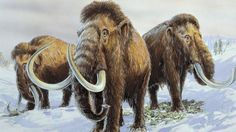 New Russian project is devoted to studying the DNA of extinct animals.