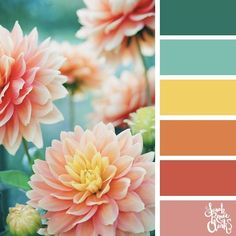 Explore the colors of nature with these 25 color palettes inspired by flowers, bouquets and gardens. Floral color inspiration for wedding color palettes or flower arrangements and more. Color Schemes Colour Palettes, Spring Color Palette, Nature Color Palette, Colour Pallette, Spring Colors, Color Combos, Summer Color Palettes, Yellow Color Schemes, Pink Color Combination