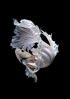 """Результат пошуку зображень за запитом """"рыбки"""""""