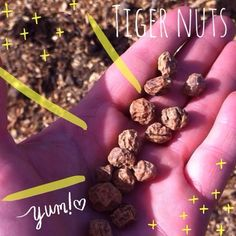 Planted my Tiger Nuts today. See the video here https://m.youtube.com/watch?feature=youtu.be&v=ziHHTlorg2w.  #gyo #tigernuts #tigernutmilk #nuts #seeda #allotmentlife #allotment #garden #gardening #eco #selfsufficient #yummy #food #eat #grow #plant #natural #tasty