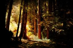 Nature Photography trees forest sunshine by moonlightphotography,