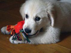 Happy National Dog Day: 'Howliday' celebrates man's favorite four-legged furry friends