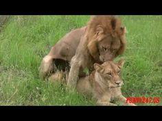 SO AMAZING   Big Animal Mating