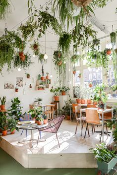 ATELIER RUE VERTE , le blog: Amsterdam / Wildernis, jungle sauvage mais urbaine /