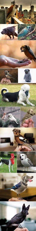 Priviți aceste fotografii: păsări cu cap de câine realizate în Photoshop