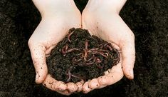 I just can't stop talking about worms! Build a worm bin to create a rich compost of 'black gold' for your garden