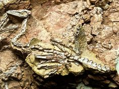 Coelophysis by Sam_Wise, via Flickr  at the NM Museum of Natural History  Albuquerque, NM