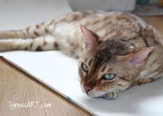 Katzenbild: Caspar hilft mir beim Skizzieren