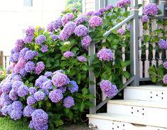 #Inspiratie #Hortensia #Hydrangea #Tuin #Decoratie #MazzTuinmeubelen