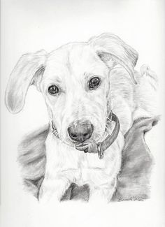 Custom Dog Portrait pencil drawing graphite by PatouPetPortraits