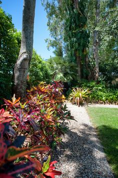 Queensland Homes Blog » Real Home: Tropical Modern » Queensland Homes Blog