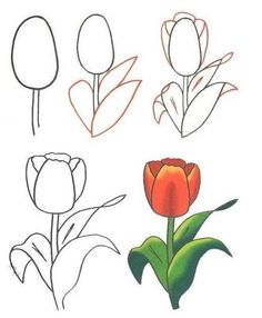 How to Draw a Tulip – Really Easy Drawing Tutorial Art Drawings For Kids, Doodle Drawings, Easy Drawings, Doodle Art, Pencil Drawings, Flower Drawings, Drawing Flowers, Drawing Lessons, Drawing Step