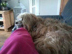Onze hond bono