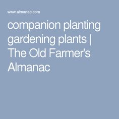 companion planting gardening plants | The Old Farmer's Almanac