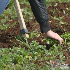 Che fatica !!! La sarchiatura è una fase della produzione biologica ahinoi molto faticosa !! Consiste nella rimozione dell'erba infestante favorendo la circolazione dell'aria nel terreno. E' faticoso ...ma ne vale la pena !