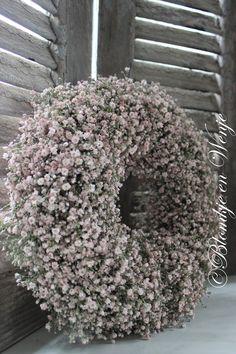 pink babysbreath ghypsolia gipskruid