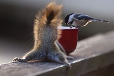 See something Berry ? by Andre Villeneuve on 500px