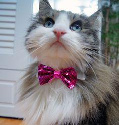 Pet Collar Accessory Glitter Bowtie by Finger Story on Etsy | Fancy schmancy for your beloved cat or doggie!