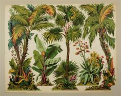 [Palmen. Nr. 249.] Theatrical Scenery, Paper Art, Paper Crafts, Forest Scenery, Toy Theatre, Vintage Hawaii, Matte Painting, Botanical Drawings, Paper Models
