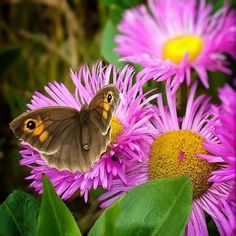 @BirdsFlyStudio - Love's like a butterfly, soft and gentle as a sigh. #sensationalbutterflies
