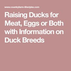 Raising Ducks for Meat, Eggs or Both with Information on Duck Breeds