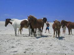 Assateague Beach: Wild Horses I