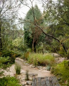 A wander through one of Australia's oldest native gardens with artist Jess Hood. Words by Georgina Reid. Images by Daniel Shipp. A wander through one of Australia's oldest native gardens with artist Jess Hood. Bush Garden, Dry Garden, Garden Grass, Garden Path, Rustic Garden Decor, Rustic Gardens, Rustic Theme, House Landscape, Landscape Design