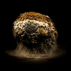 Heikki Leis' gorgeously lit series Afterlife, photos of rotting food and macro zooms of mold and decay. Rotten Food, Rotten Fruit, Still Life Photography, Macro Photography, Growth And Decay, Science Images, Time And Weather, After Life, Natural Forms