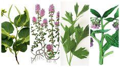 lipový květ Lípa má nejen pozitivní účinky na naše zdraví, ale člověka přiláká svou krásnou medovou vůní.Sklízí se začátkem kvetení, tedy v červnu a červenci, dříve než se začnou tvořit kulovité plody.Sklízejí se celé květenství.Suší se při teplotě do 35 ° C ve stínu, aby neztratily barvu a listy mají světle žlutou barvu. Pozitivní účinky […] The post 7 bylinek, jejichž znalost vám umožní zbavit se nepříjemných bolestí po celém těle appeared first on Příroda je lék. Korn, Plant Leaves, Health, Plants, Health Care, Plant, Planets, Salud