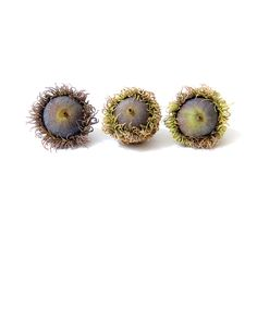 burr oak acorns (mary jo hoffman)