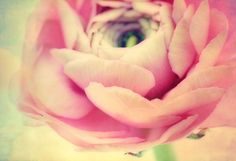 Pastel Flower | Art Print