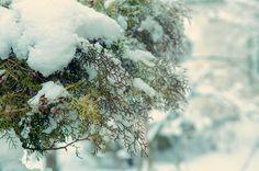 Actueel! Dít doet sneeuw met uw planten - https://www.tuincentrumoverzicht.be/actueel/5185/dit-doet-sneeuw-met-uw-planten