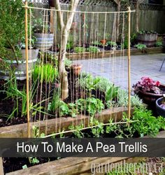 How To Make A Pea Trellis...http://homestead-and-survival.com/how-to-make-a-pea-trellis/