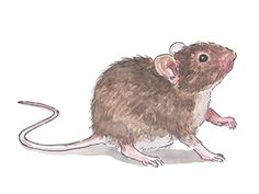 8 Poison-Free Ways to Get Rid of Mice (you can just mouse proof your food too, in glass containers)