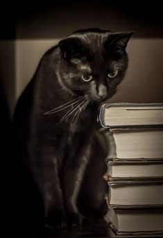 cat what cats are like when you're not home Black cat I Love Cats, Big Cats, Cool Cats, Cats And Kittens, Ragdoll Kittens, Tabby Cats, Funny Kittens, Bengal Cats, White Kittens