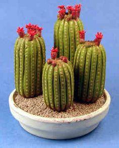 "Blooming cacti $115 By Karl Blindheim 2 1/4"" wide, 2 1/4"" tall"