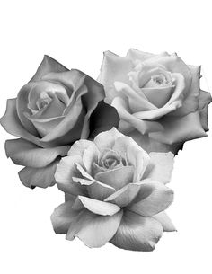 Rosa Rose Reference, Rose Flower Tattoos, Realistic Rose, Neue Tattoos, Tattoo Project, Desenho Tattoo, Tattoo Sketches, Black And Grey Tattoos, Beautiful Roses