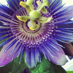 Would love to incorporate the passion flower into the theme somehow ^_^