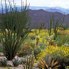 Tromp along the wildflower-dotted trails at the Living Desert