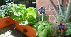 Cultivos más fáciles para comenzar un huerto en casa